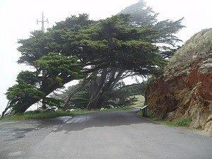 usingtrees