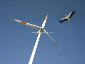 Earth Talk Wind Power Birds